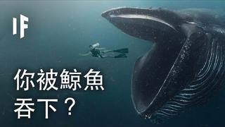 如果你被鯨魚吞下?| 大膽科學