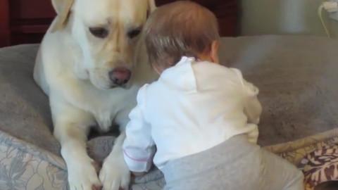 善良小主人和懵懂宠物的日常
