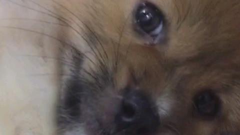 狗带生无可恋表情_狗带生无可恋表情分享展示