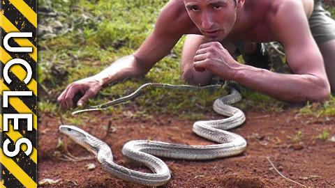 最可怕的蛇:黑曼巴蛇