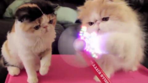 可爱又迷人的角色——猫咪