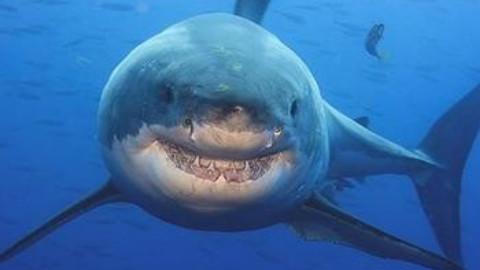 3分钟看懂恐怖鲨鱼片《鲨滩》灾难视频又饿啦宝宝油缸图片