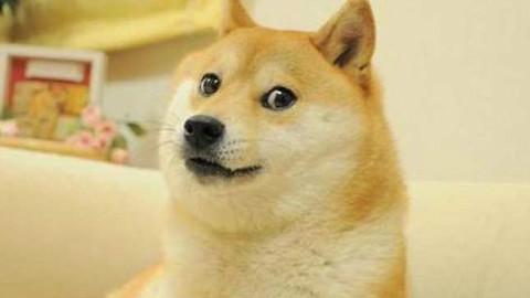 牵狗情侣头像搞笑柴犬