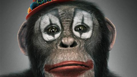 电影《动物世界》正式杀青 小丑猩猩散发独特气质