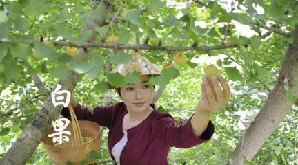 【滇西小哥】摘些白果,炖一锅秋季养生汤:白果炖猪小肠