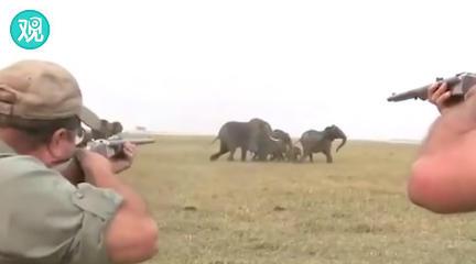 """象群""""怒吼""""着追捕猎人"""