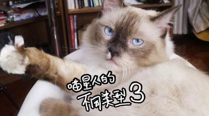【杨俊杰】配音把自己配笑了!喵星人的不同类型,第三弹~
