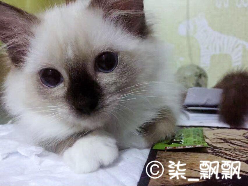 acfun第一届宠物选美选丑大奖赛