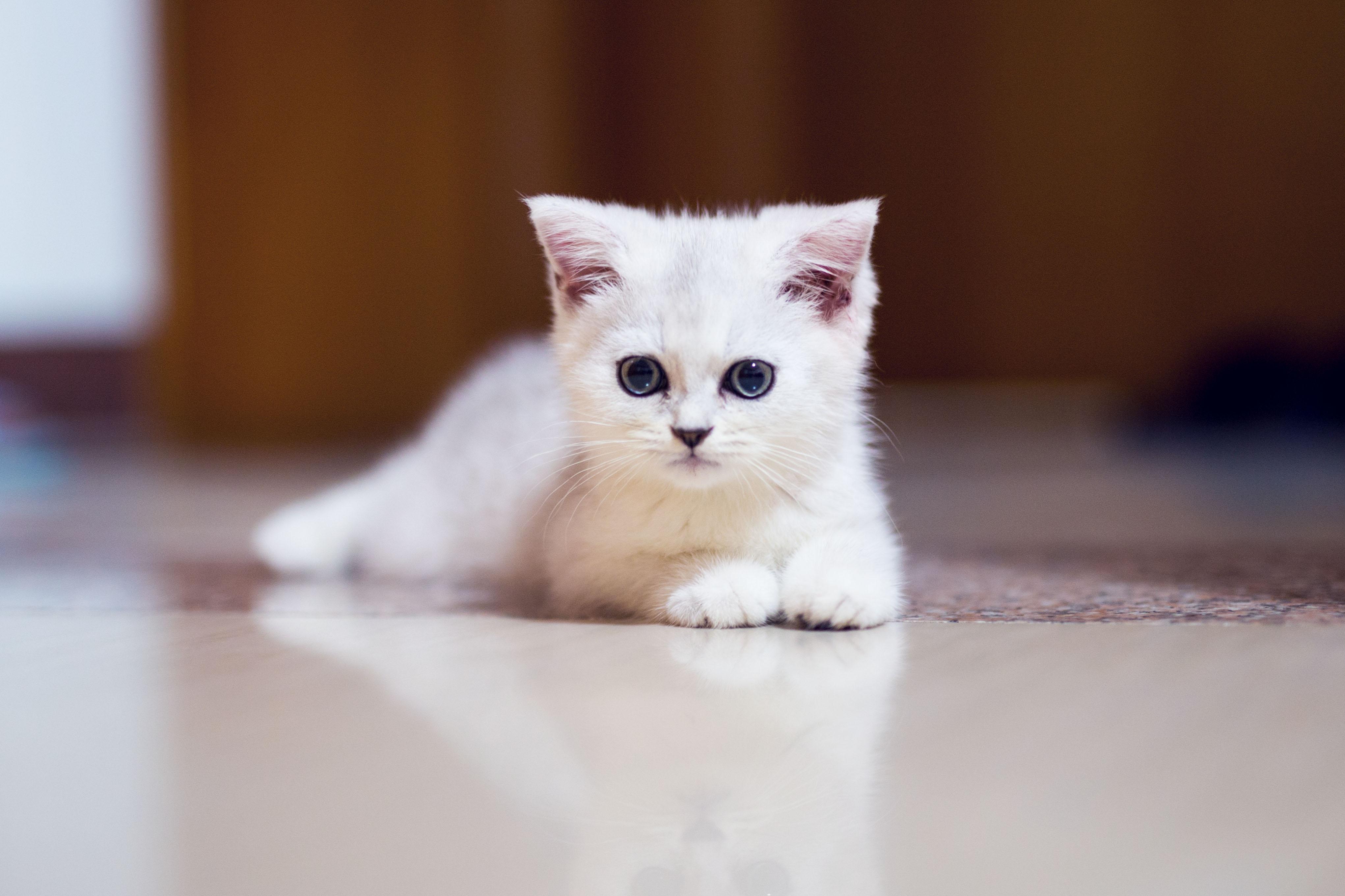 壁纸 动物 猫 猫咪 小猫 桌面 4084_2722
