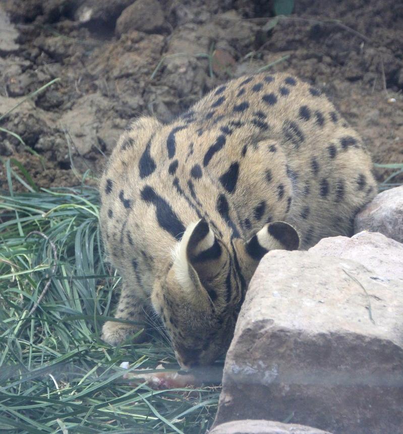 记忆中,这部影片就是武汉动物园协助的.