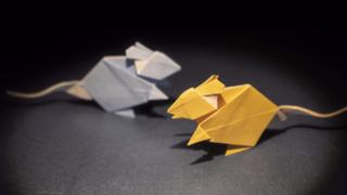 鼠年要来啦,教你用纸折一只小老鼠