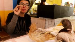 """王思聪同款""""网红鸭"""",价值12000元一对,体验富人生活"""