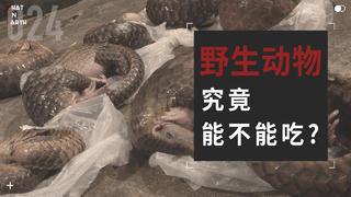 【WOE】野生动物究竟能不能吃?