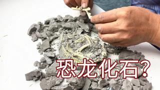 大爷现场抠出来的恐龙化石,不知道能否在北京换套房