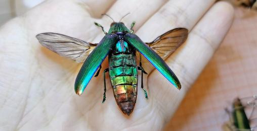 好漂亮的虫子!它不会是吃彩虹糖长大的吧?