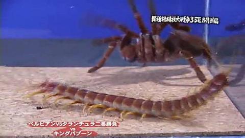 无双大蛇二番试炼 第一战 亚马逊巨人 VS 皇帝巴布(蜈蚣先辈)Part1