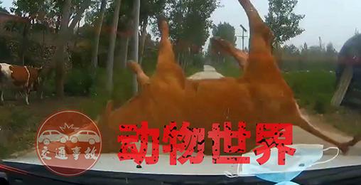 交通事故:动物世界2021(一)