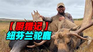 【厨猎记】纽芬兰驼鹿(S01E02)