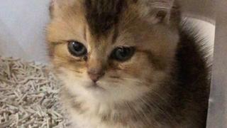 你看到过我的猫猫吗?