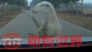 交通事故:动物世界2021(二)