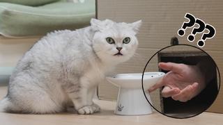 在猫咪干饭时偷走食物!猫:变成空气?