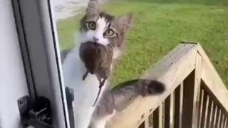 猫猫:快开门啊!怕你饿着我费了好大劲才抓来的
