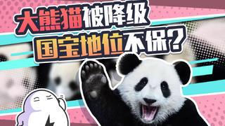 """国宝大熊猫被""""降级"""",以后我们能人手一只吗?"""