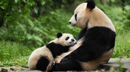 熊猫降级:人与自然可其乐融融