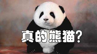 嘘!我偷偷养了一只熊猫!【熊猫工厂】全新崽崽抢先看!