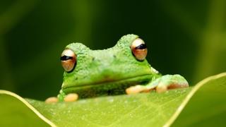 【录播】地下艺:蛙叫
