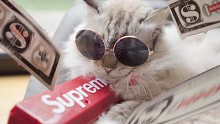 小猫咪:你不是要找富婆嘛?我教你啊!