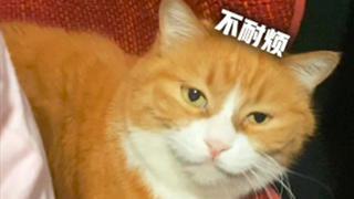 """小咪与姜阿姨的""""坐垫之争""""!"""
