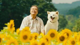 日本高分催泪电影,狗狗不知主人去世,一直找食物给主人