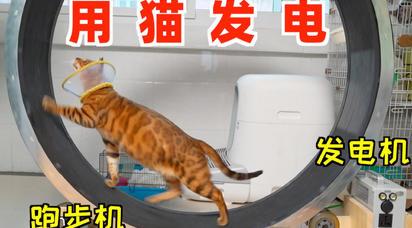 把跑步机改装成发电机 ,让猫跑步发电!省钱!全家电都用不完!