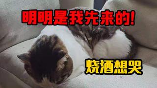 【森崎の三只猫】明明是本喵先来的!
