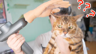 自制电动撸猫器,动力强劲,用后必秃!