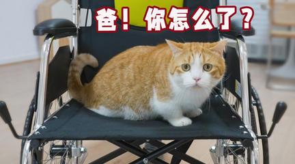因用鲱鱼罐头臭醒熟睡女朋友,男子坐上了轮椅......
