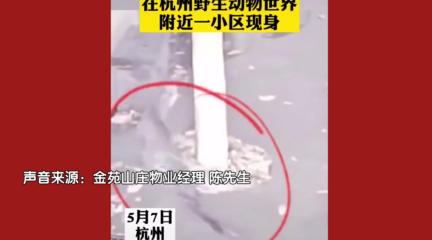杭州发生金钱豹外逃事件