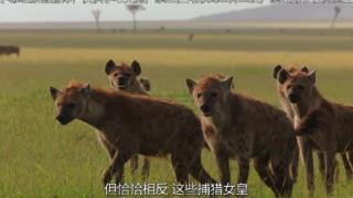 【纪录片】【捕猎皇后】【S01E05】【中英字幕】【1080P】【2021】