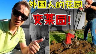 外国人也开始在花园种菜养鸡?中国人祖传技能文化输出!